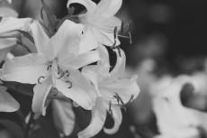 flower564-3
