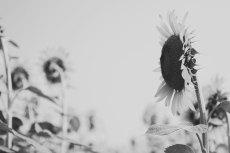 flower578-3
