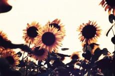 flower579-2