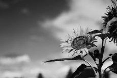flower580-3