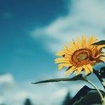 【高解像度】空と向日葵とミツバチ(3パターン)