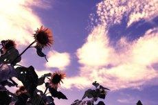 flower585