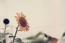 flower589