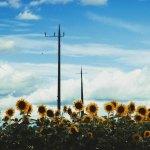 【高解像度】向日葵と電柱と空(3パターン)