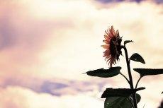 flower591