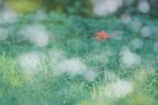 flower601
