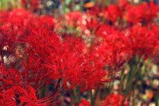flower610-2