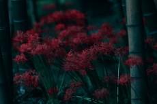 flower619-2
