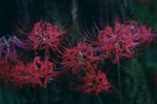 flower620-2