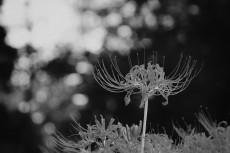 flower623-3