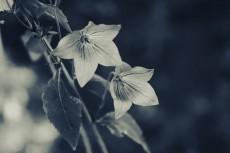 flower628-3