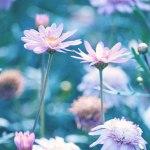 【高解像度】花畑に咲く二輪の花(3パターン)