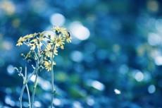 flower658-2