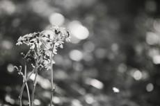 flower658-3