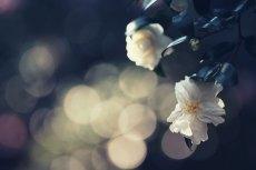 flower660-2