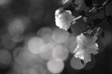 flower660-3