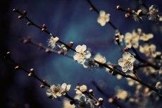 flower662-2