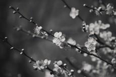 flower662-3