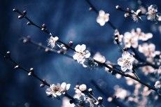 flower662