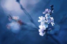 flower675