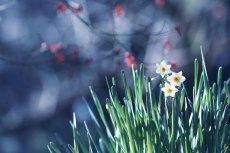 flower679