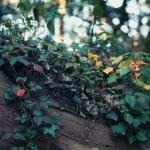 【高解像度】森の中の色とりどりの葉(3パターン)