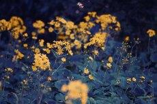 flower686-2