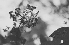 flower713-3