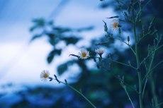 flower714