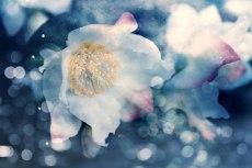 flower730