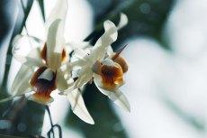 flower732-2