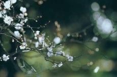 flower735-2