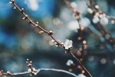 flower737