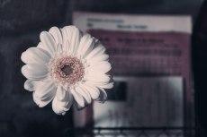 flower750-2