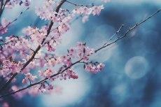flower757