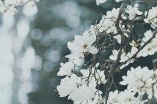 flower759-2