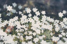 flower762-2