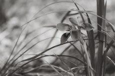 flower764-3