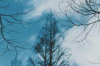 【高解像度】枯れ木と寒空(3パターン)