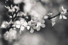flower776-3