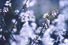 flower779-2
