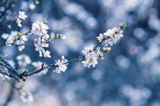 flower780