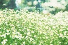 flower794-2
