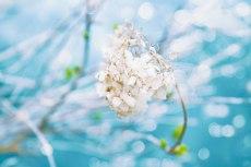 flower801