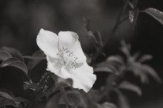 flower808-3