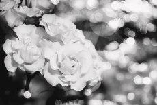 flower810-3