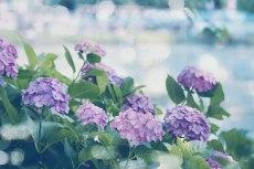 flower819