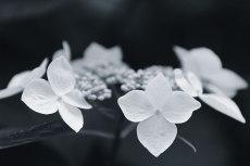 flower829-3