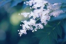 flower834-2