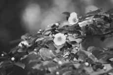 flower835-3